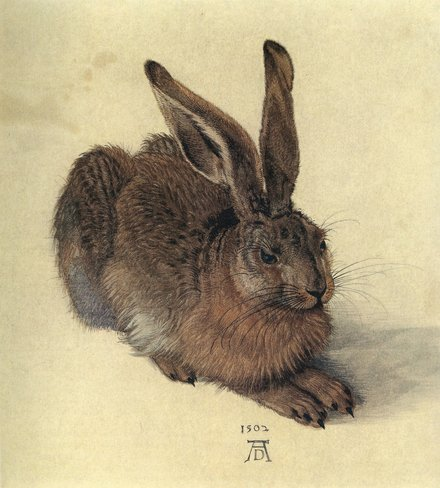 The Hare's Course